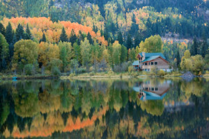 telluride-house-forest